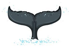 Une queue de baleine à bosse vecteur