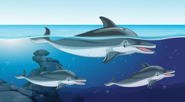 Trois dauphins nageant dans l'océan vecteur