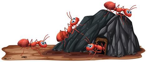 Une famille de fourmis vivant dans un trou vecteur