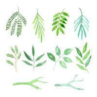 aquarelle ensemble de feuilles et de branches vecteur