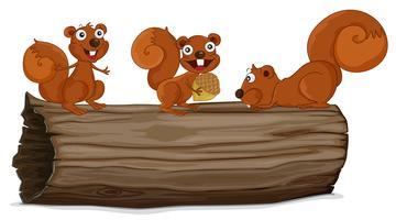 Écureuils sur un journal