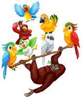 Chimpanzé et nombreux oiseaux sur la branche