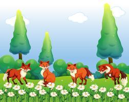 Quatre renards dans le champ de fleurs
