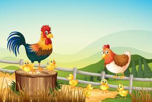 Poulets vivant sur les terres agricoles vecteur