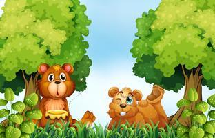 Ours et forêt