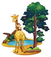 Girafe et singe au bord de l'étang vecteur