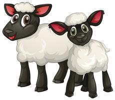 Deux agneaux blancs souriants vecteur