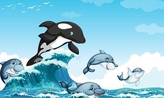 Dauphins nageant dans l'océan vecteur