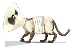 Petit chat avec collier et bandage vecteur