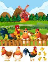 Famille de poulet sur les terres agricoles