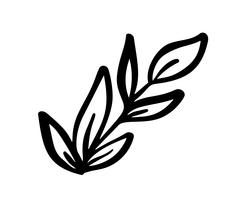 Éléments floraux vintage de vecteur esquissés à la main - laurier laisse des tourbillons de fleurs et de plumes. Sauvage et libre. Parfait pour les invitations cartes de vœux, citations blogs cadres de mariage, affiches