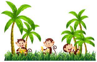Trois singes mangent des bananes
