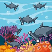 Scène avec des requins-marteaux dans l'océan