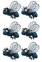 Mouches domestiques avec différentes émotions