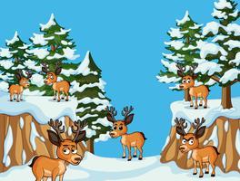 Nombreux cerfs dans la montagne de neige vecteur