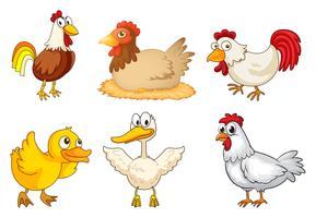 Un coq, une poule et un canard vecteur