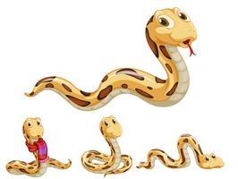 Série serpent vecteur