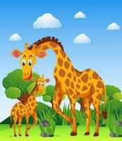 Deux girafes sur le terrain vecteur