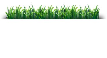 Design sans couture avec l'herbe verte vecteur