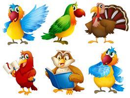 Créatures à plumes colorées vecteur