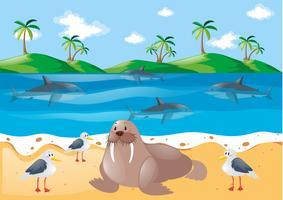 Animaux marins et pigeons sur la plage