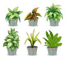 Plantes à feuilles vertes vecteur