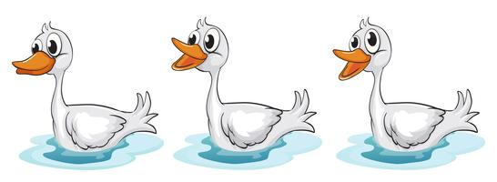 Canards souriants