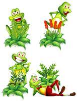 Quatre grenouilles et différents types de plantes