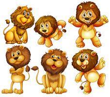 Ensemble de lion