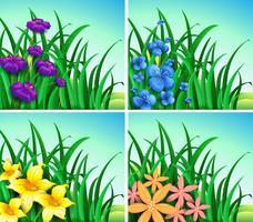 Quatre scènes de fleurs et d'herbe vecteur