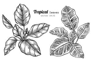 Ensemble de collection de feuilles tropicales, dessin d'illustration.