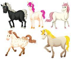 Les chevaux vecteur