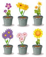 les plantes vecteur