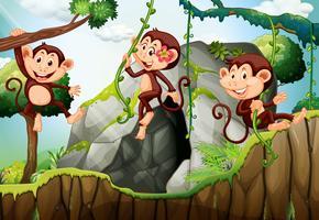 Trois singes suspendus à la branche