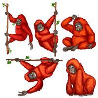 Orang-outan vecteur