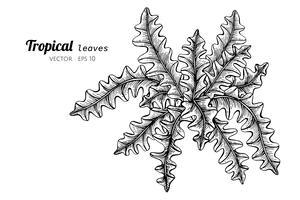 Feuilles tropicales dessin illustration