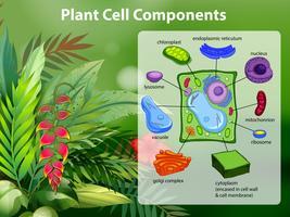 Diagramme des composants des cellules végétales vecteur