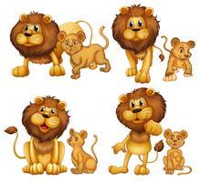 Ensemble de lion vecteur
