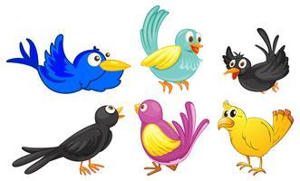 Oiseaux de couleurs différentes