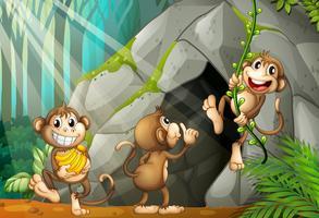 Trois singes vivant dans la grotte