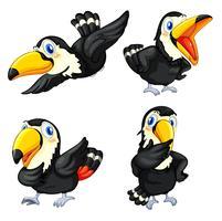 Série d'oiseaux toucan vecteur
