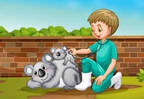 Un vétérinaire prenant soin de Coala vecteur