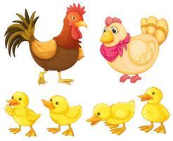 Famille de poulet vecteur