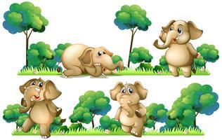 Éléphants sur le terrain
