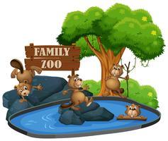 Beaver au zoo vecteur