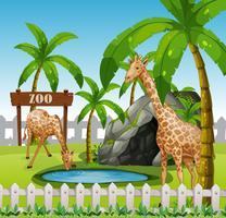 Girafes dans l'enceinte d'azoo vecteur