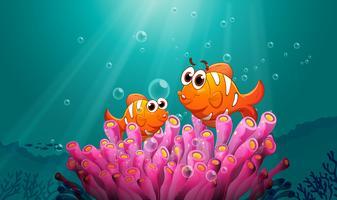 poissons dans l'eau