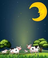 Vaches sous la lune endormie