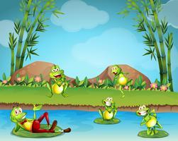 Cinq grenouilles vivant au bord de l'étang vecteur