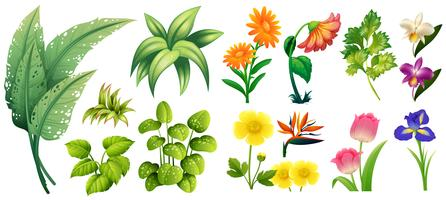 Différents types de fleurs et de feuilles